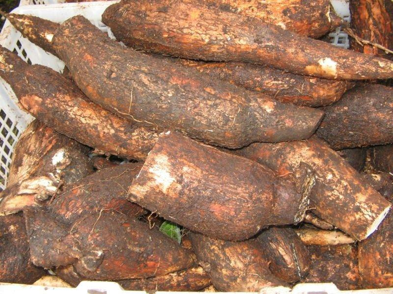 taking a look at cassava Everything you should know about cassava flour, the allergy-friendly starch that's taking over it turns out you can eat bread on a grain-free diet.